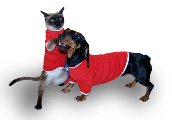Camisetas para mascotas